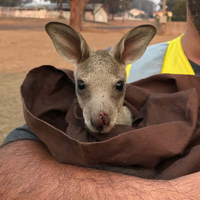 Helping wildlife on Cooma deployment