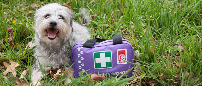 Our Pet First Aid course is ready to go!